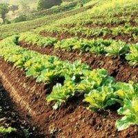 Ghana Farmers Open Talk Forum